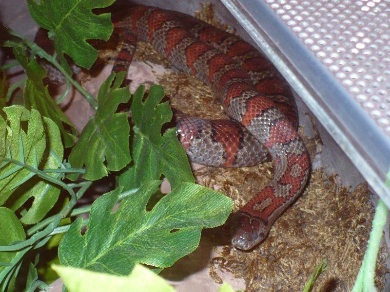 35cc42a7ea88fd mkey's Snake Blog