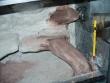 Budowa terrarium - Barwienie ścian